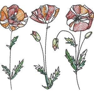 Mohnblumen Strichzeichnung farbig 13x18